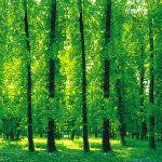 София с нова програма за зелените площи  - помощ до 5 хиляди лева